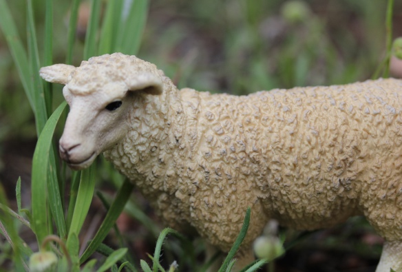 Sue the Ewe nibbles away